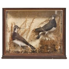Victorian Taxidermy with Original Stamp
